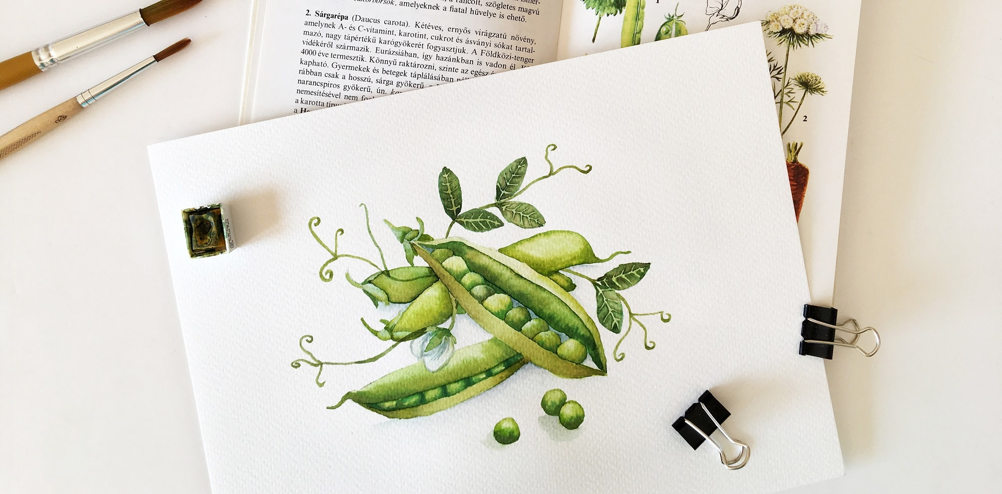Watercolor Veggies - greenpeas
