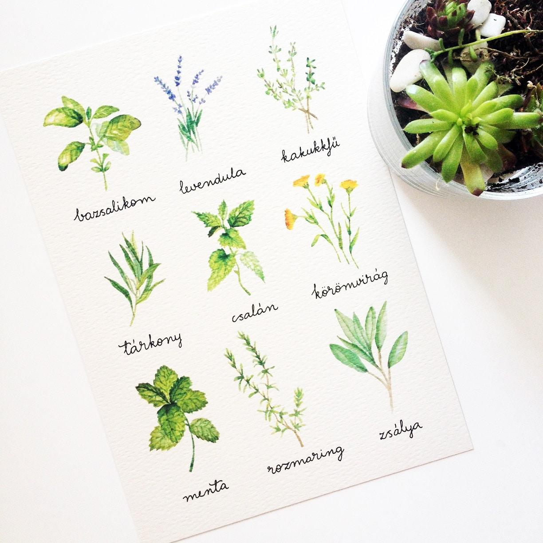 Watercolor florals - herbs
