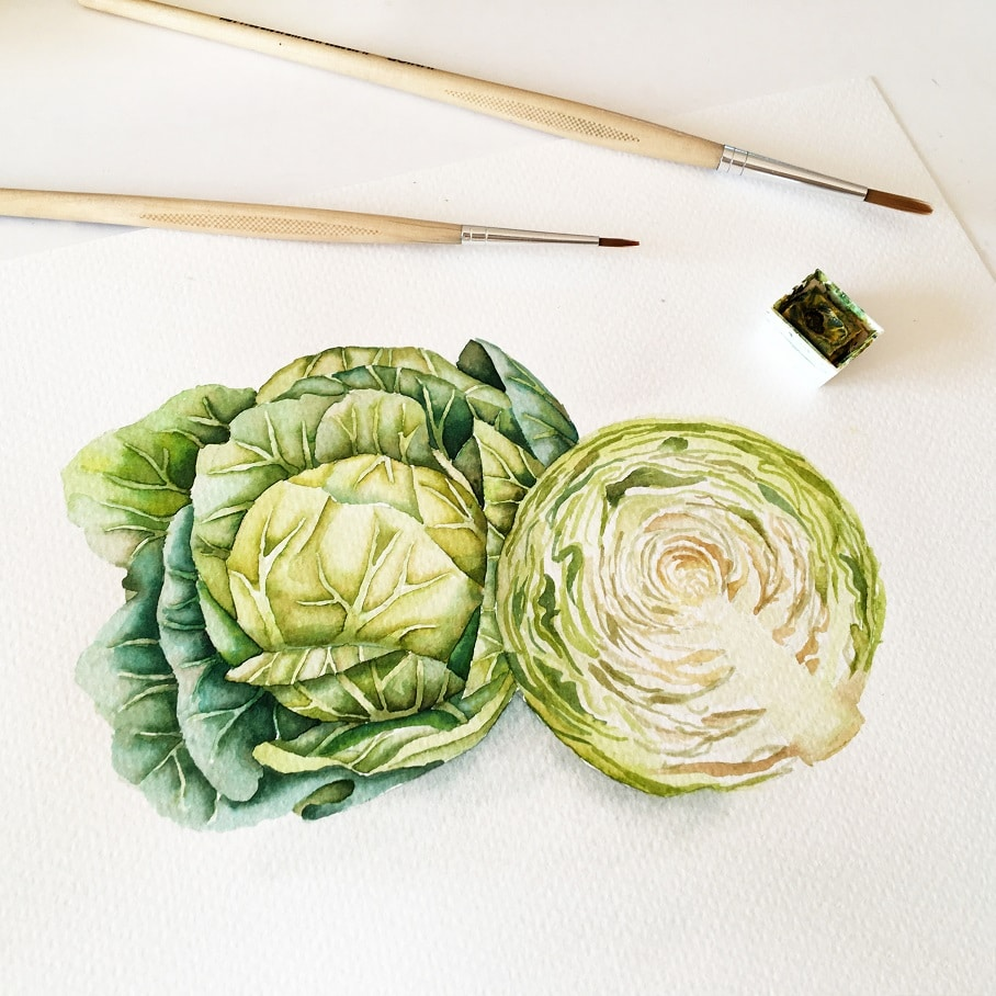 Watercolor Veggies - cabbage