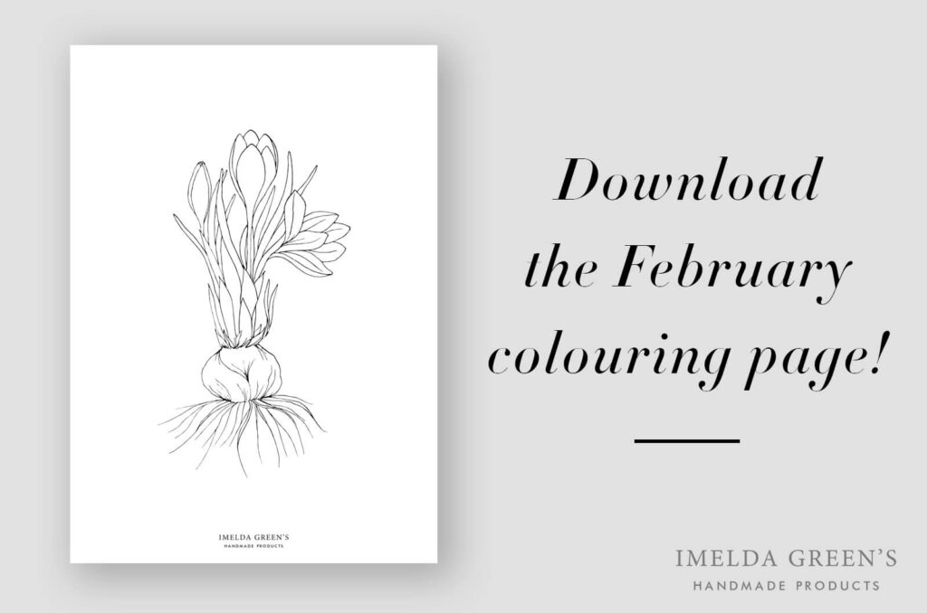 Downloadable coloring page | Crocus botanical illustration - watercolor tutorial