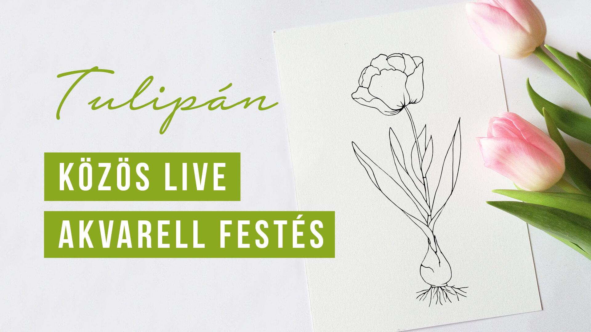 Tulipán színező | virágok | akvarell festés kezdőknek